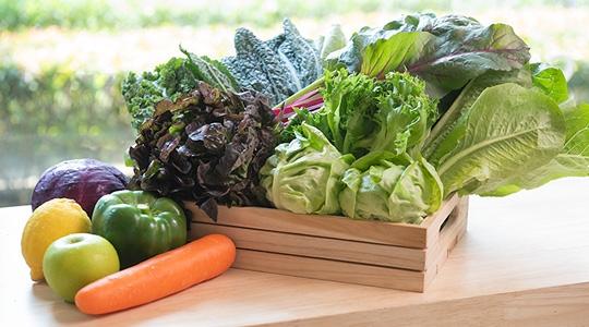 """Healing Hub"" แบรนด์น้ำผักและผลไม้สกัดเย็นสุดเฮลท์ตี้จากฟาร์มผักอำเภอภูเรือสู่ใจกลางกรุงเทพฯ"