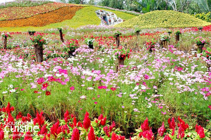 สวนดอกกะเจ้า