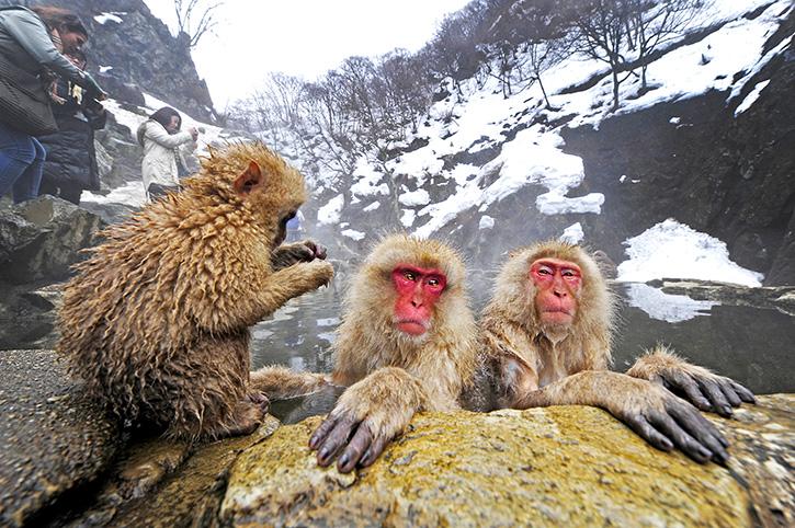 สัมผัสหัวใจของแดนปลาดิบที่ จังหวัดนางาโนะ ประเทศญี่ปุ่น