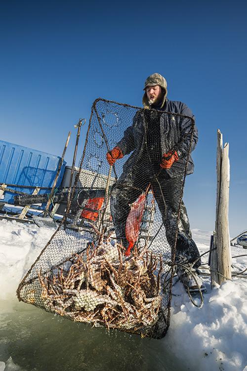 "Secrets of Alaska king Crab   : 5 ความลับฉบับ ""ปูอลาสก้า"""