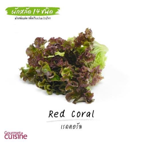 เรดคอรัล Red Coral