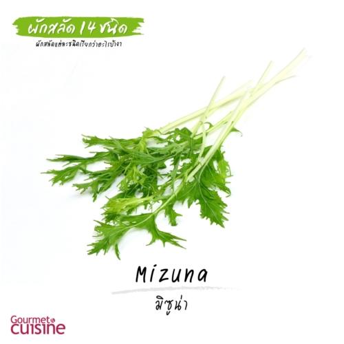 มิซูน่า Mizuna