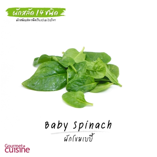 ผักโขมเบบี้ Baby Spinach