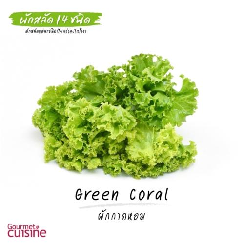 ผักกาดหอม Green Coral