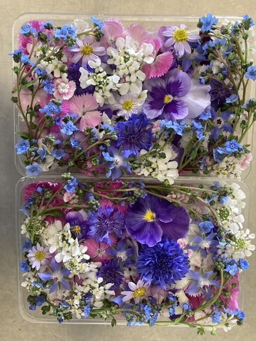 """""""ดอกไม้กินได้"""" จาก Morganic Farm วังน้ำเขียว"""