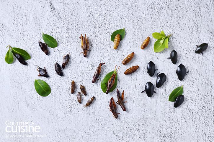 โปรตีนจากแมลง เทรนด์อาหารแห่งโลกอนาคตที่น่าจับตามอง