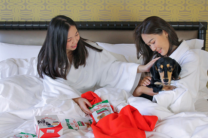 Love Me Love My Dog พักผ่อนสุดหรูกับเพื่อนสี่ขา ที่โรงแรมเชอราตัน แกรนด์ สุขุมวิท