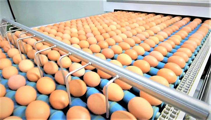 CPF หนุน 7 คอมเพล็กซ์ไก่ไข่ ใช้หลักเศรษฐกิจหมุนเวียน ลดของเสียในกระบวนการผลิต บริหารทรัพยากรคุ้มค่า